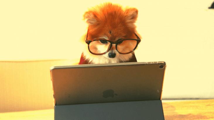 entrevue, petit chien, Ipad, entrevue virtuelle