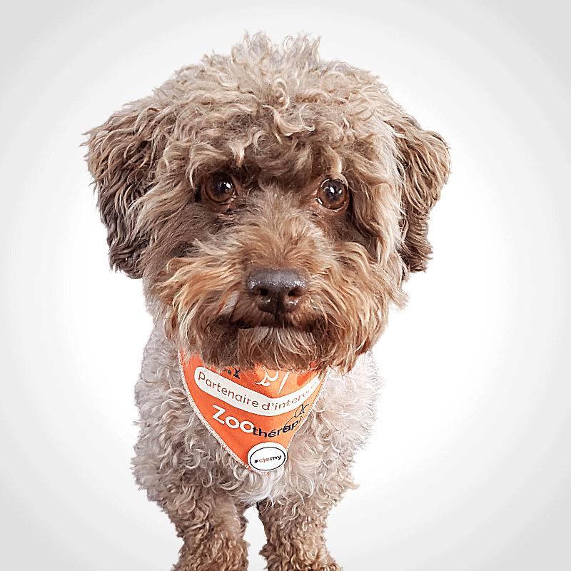 Charly, partenaire d'intervention, zoothérapie, intervention animale
